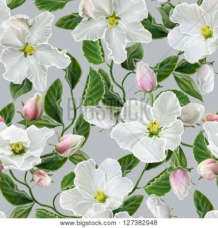 Floral background pattern seamless. branch of apple blossoms. Spring flowering. White flowers.
