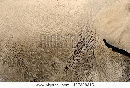 Close up gray african elephant skin texture