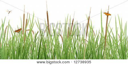 Meadow Scene on White