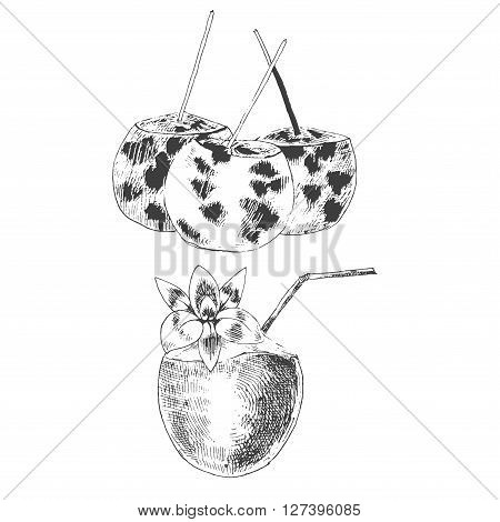 vector coconuts hand drawn sketch. vintage style detailed ink and pencil illustrations