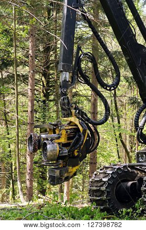 Forest harvester felling head. Heavy forestry vehicle employed in cut-to-length logging operations for felling, delimbing and bucking trees.