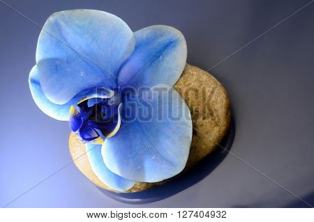 Close up of Orchid blue flower for background