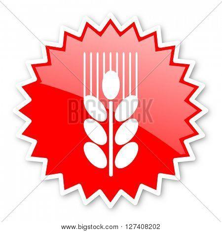 grain red tag, sticker, label, star, stamp, banner, advertising, badge, emblem, web icon