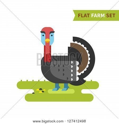 Flat turkey colorful vector illustration. Isolated turkey logo for your design in flat style. Cute turkey pecks grain on the green lawn. Part of flat farm set