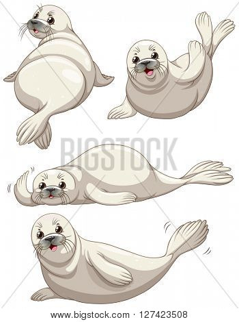 Seal in four poses illustration
