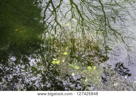 reflections and organic waste on green water surface