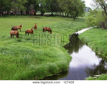 Horses In Pasture By Creek