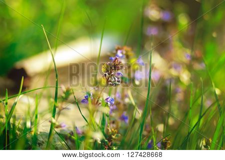 violet romantic flowers and green grass and yellow rays of sun and beautiful boke,summer vacation,relax romanti cnot focused rays sun spring