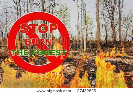 Text Stop Burn The Forest On Red Stop Sign With Background Of Burnt Tree In Flame