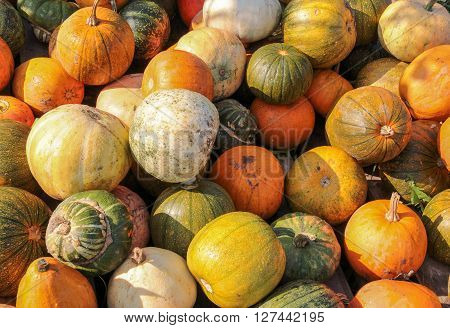 colorful variation showing lots of gourds in sunny ambiance