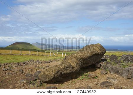Toppled Moai statue lying amongst the rolling green pasture of Easter Island.