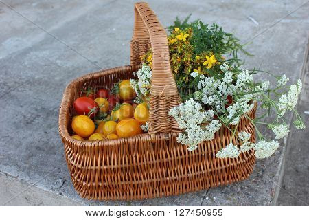 Red and yellow tomatoes in the basket covered with herbs. Full basket of tomatoes. Organic home gardening. Home grown organic tomatoes in basket with herbs. Home grown harvest.