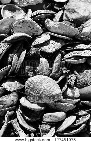 Used and discarded sea shell background from a beach coastline, black and white image
