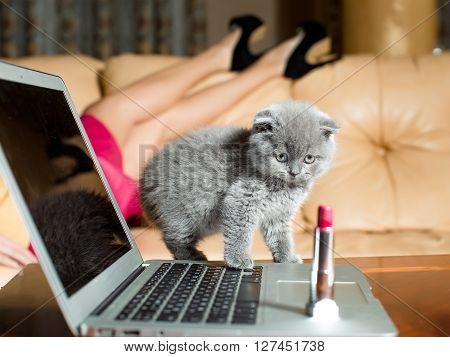 Kitten On Laptop With Lipstick