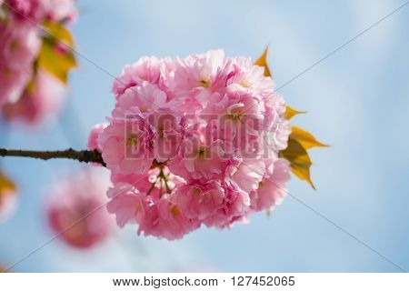 Pink Flowers In Blossom