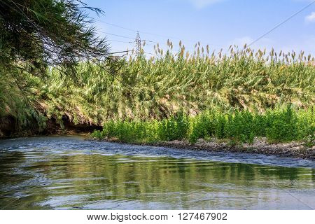 Plants and bushes growing along the banks of the Jordan River Israel ** Note: Visible grain at 100%, best at smaller sizes