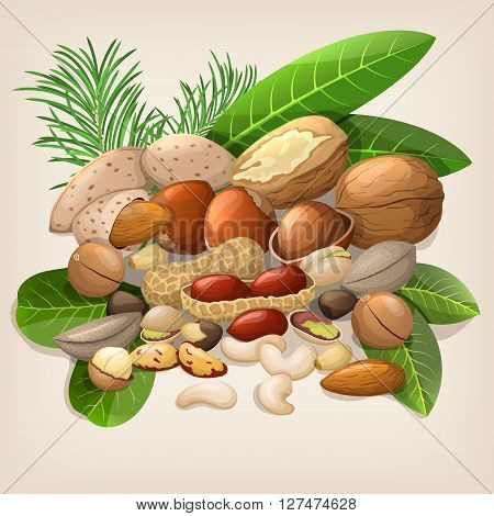 Nut collection with raw food mix. Vector illustration