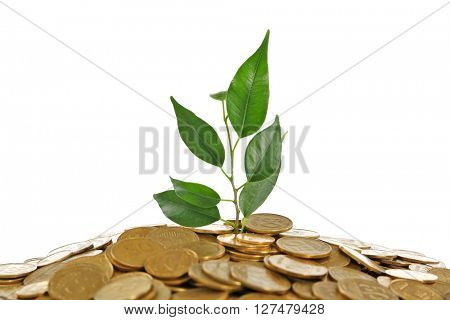 Pile of coins with young plant isolated on white