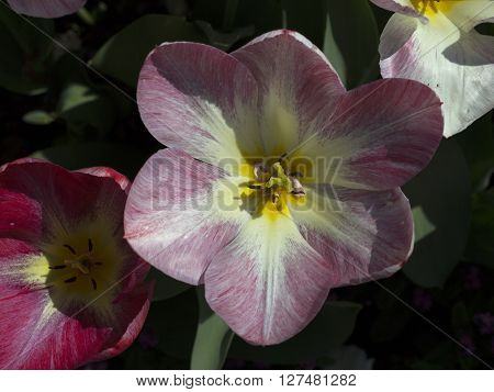 A close up on a flower in the sun ligth
