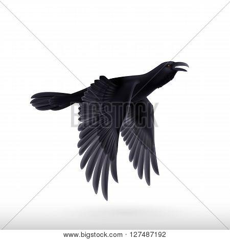 Flying black raven. Illustration on white background