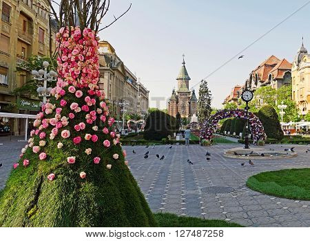 TIMISOARA ROMANIA - APRIL 23 2016: Panoramic view of historic buildings from Victory Square with floral arrangements in front.