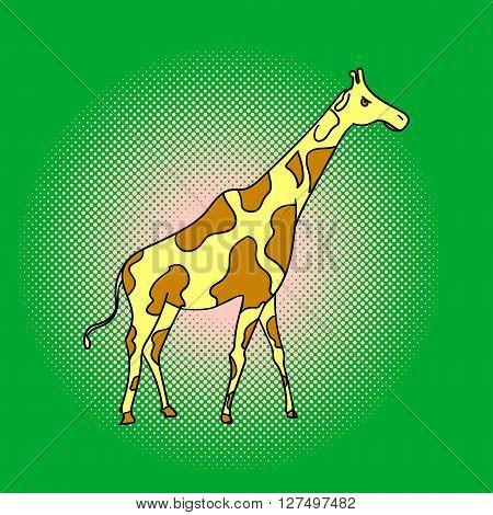 Giraffe pop art vector. Beautiful adult Giraffe looking at us, illustration isolated on white