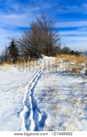 pathway across winter meadow at nice day
