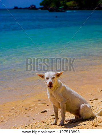 Salty Sea Dog On a Beach