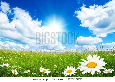 field of summer flowers and perfect sky