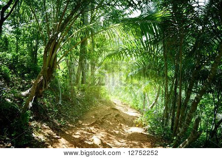 ground road in jungle of Dominican