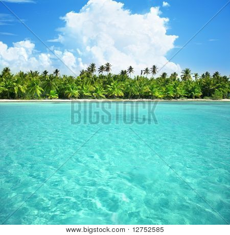 palms and caribbean sea