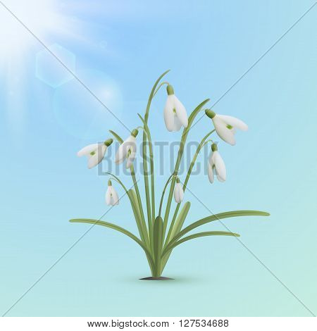 Spring background template. Snowdrop flowers with sun on blue backdrop. Vector illustration.
