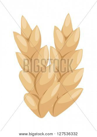 Wheat ear vector icon.
