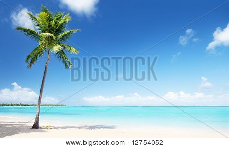 Palma y playa