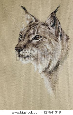 wild lynx pastel drawn portrait with detailed paper texture