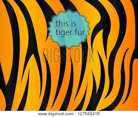 Big tiger fur texture digital vector image