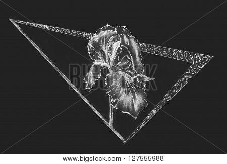 abstact illustration. geometric ethnic ornament iris flower