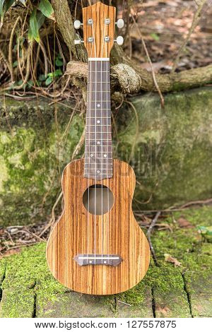 Ukulele in the garden Acoustic musical instrument