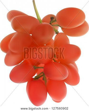 illustration with red grapes isolated on white background