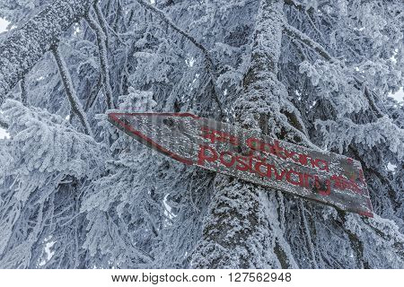 Wooden hiking direction sign on frozen snowy fir tree trunk showing the way to Postavaru chalet in Postavaru mountain during winter.
