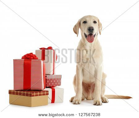Cute Labrador dog with gift boxes isolated on white