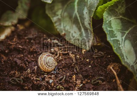 Empty Snail Shell On The Ground At The Garden