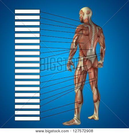 Concept or conceptual 3D male or human anatomy, a man with muscles and textbox on blue gradient background