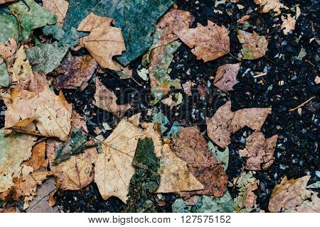 Autumn leaves on the sidewalk