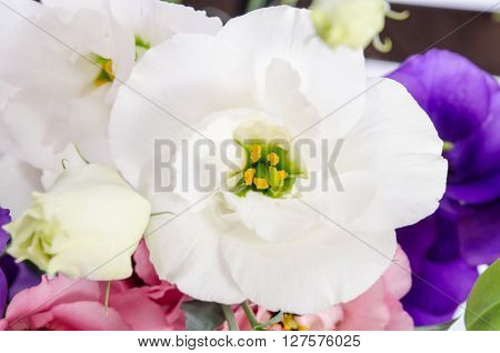 white eustoma flowers in colourfull bunch close up