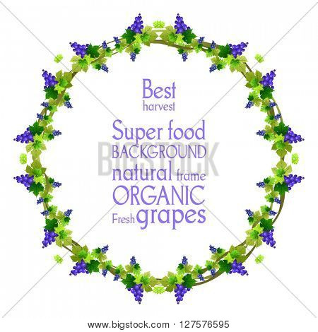 Blue grape round frame. The natural design banner,ticket, leaflet and so on. Place for text. Isolated elements.