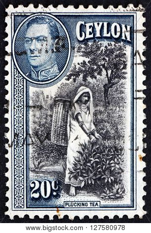 SRI LANKA - CIRCA 1938: a stamp printed in Sri Lanka shows Picking Tea circa 1938