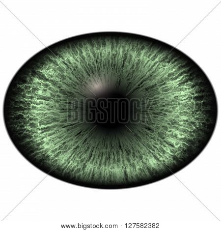 Elliptic Realistic Green Iris, Light Reflection In Eye