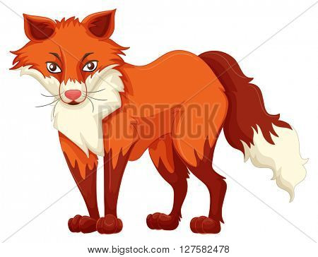 Red fox standing on white background illustration