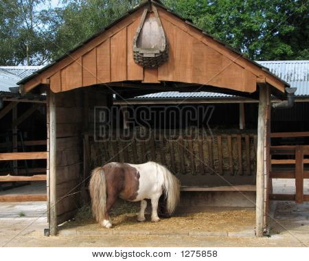 Minature Pony